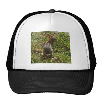 Bunny Rabbit Hare Stuff Trucker Hat