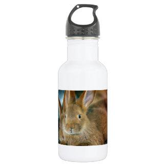 Bunny Rabbit 18oz Water Bottle