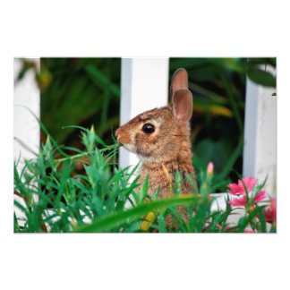 Bunny Rabbit Photo Art