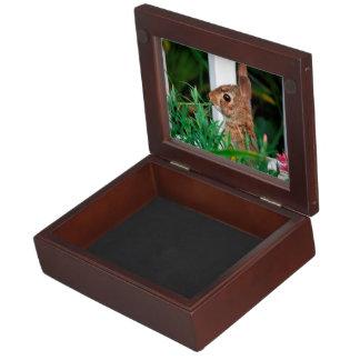 Bunny Rabbit Memory Boxes