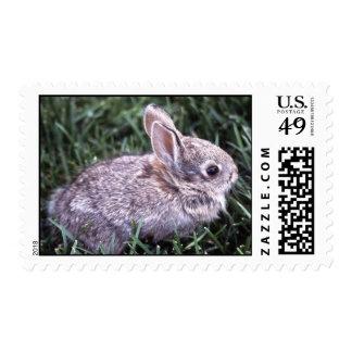 Bunny Rabbit Postage