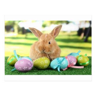 Bunny Rabbit Postcard