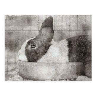 Bunny Rabbit Retro Easter Postcard