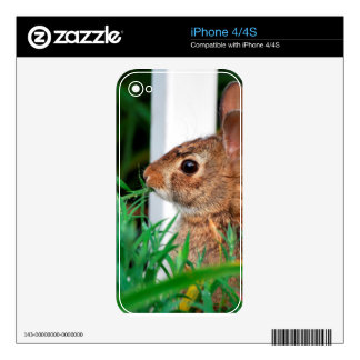 Bunny Rabbit Skin For The iPhone 4