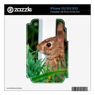 Bunny Rabbit iPhone 2G Skins