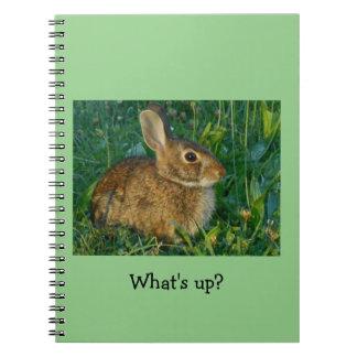 Bunny Rabbit Spiral Photo Notebook