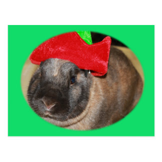 Bunny Rabbit with Santa Hat says Merry Christmas Post Cards