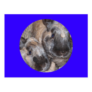 Bunny Rabbits - 2 Brown Silky Bunnies Postcards