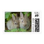 Bunny rabbits postage stamp