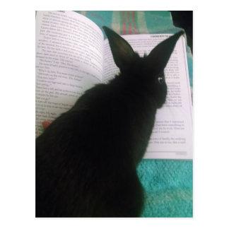 Bunny Reading Postcard