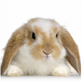 Bunny Sculpture Photo Cutout