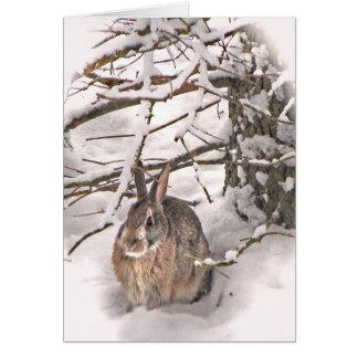 Bunny seeking shelter greeting card