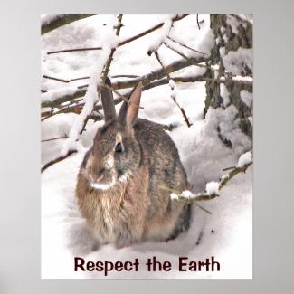 Bunny Seeking Shelter Earth Day