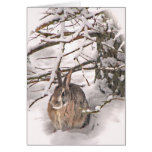 Bunny seeking shelter greeting card