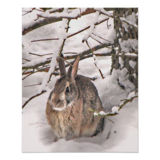 Bunny Seeking Shelter Poster