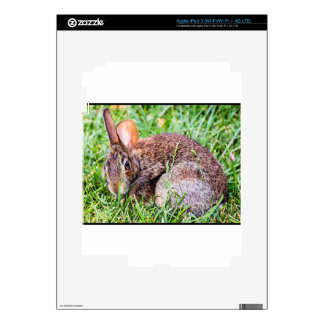 Bunny Decal For iPad 3
