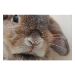 Bunny stare (print)