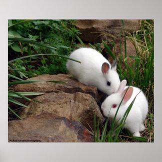 Bunny whisper poster