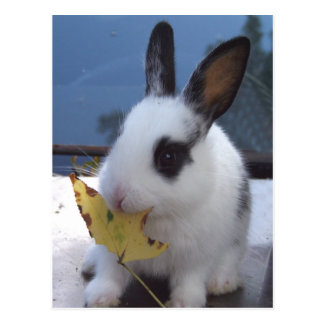 Bunny with leaf postcards