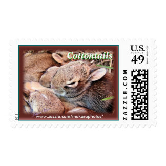 BunnyStamps-customize Postage Stamps