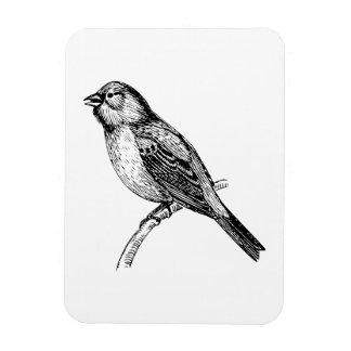 Bunting Bird Art Rectangle Magnets