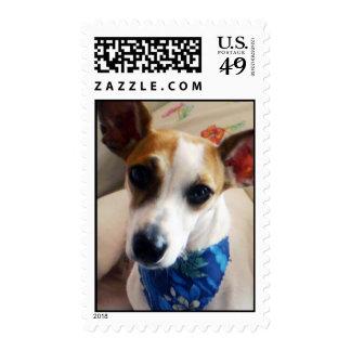 Buñuelo el sello del perrito