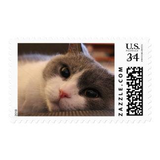 Buñuelo los sellos del gato