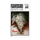 Buon Natale Pine Branch Postage Stamps