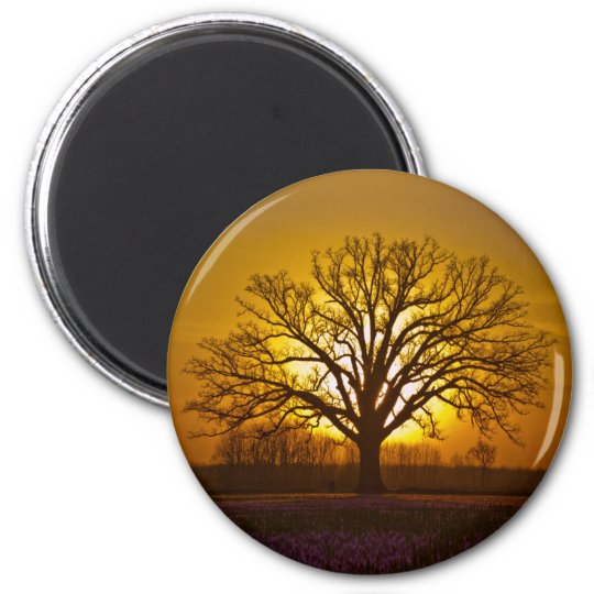 Bur Oak Sunset Magnet