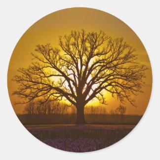 Bur Oak Sunset Round Stickers