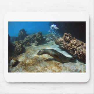 Burbujas que soplan del león marino de las Islas G Alfombrillas De Ratones