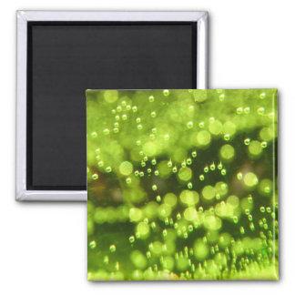 Burbujas verdes imán cuadrado