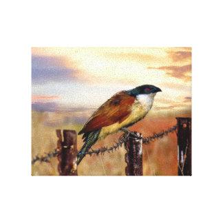 Burchell's Coucal cuckoo bird Canvas Print