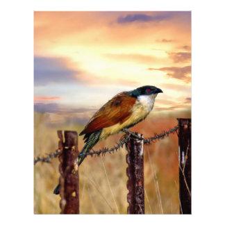 Burchell's Coucal cuckoo bird Letterhead