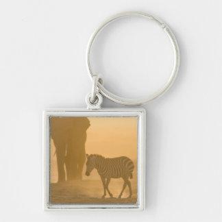 Burchelli de la cebra común, del Equus, y elefante Llaveros