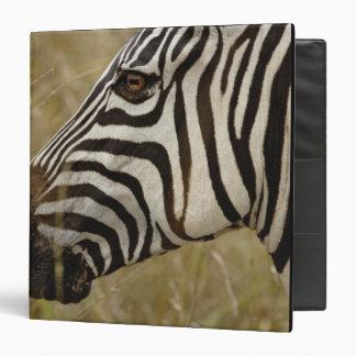 Burchelli's Zebra, Equus burchellii, Masai 3 Ring Binders