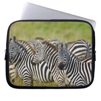 Burchelli's Zebra, Equus burchellii, Masai Mara, 2 Laptop Sleeves