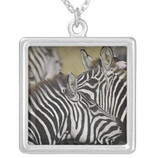 Burchelli's Zebra, Equus burchellii, Masai Mara, 3 Pendants
