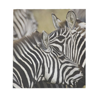 Burchelli's Zebra, Equus burchellii, Masai Mara, 3 Note Pad