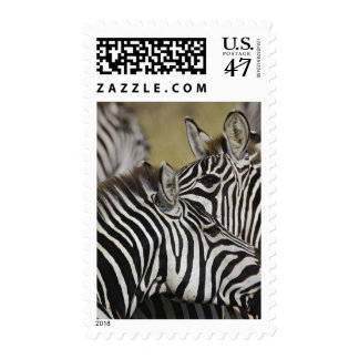 Burchelli's Zebra, Equus burchellii, Masai Mara, 3 Stamp