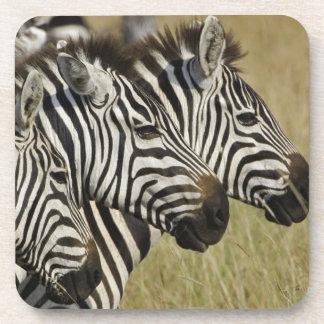 Burchelli's Zebra, Equus burchellii, Masai Mara, 4 Beverage Coaster