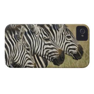 Burchelli's Zebra, Equus burchellii, Masai Mara, 4 iPhone 4 Case
