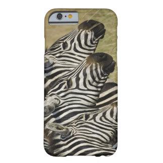 Burchelli's Zebra, Equus burchellii, Masai Mara, 4 Barely There iPhone 6 Case