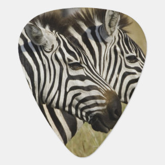 Burchelli's Zebra, Equus burchellii, Masai Mara, 4 Guitar Pick