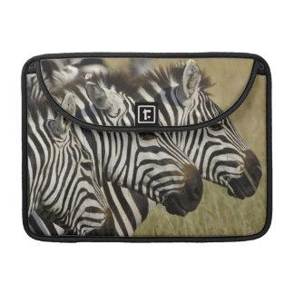 Burchelli's Zebra, Equus burchellii, Masai Mara, 4 MacBook Pro Sleeve