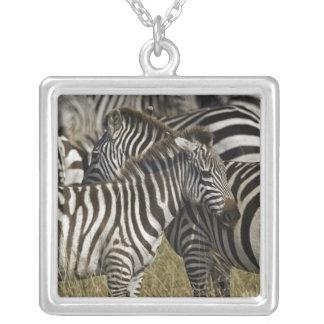 Burchelli's Zebra, Equus burchellii, Masai Mara, Pendants