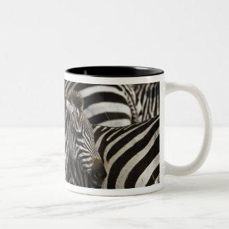 Burchelli's Zebra, Equus burchellii, Masai Mara, Two-Tone Coffee Mug