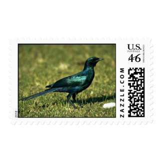 Burchell's Glossy Starling Postage Stamps