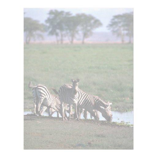 Burchell's/Grant's Zebras - Herd Drinking Customized Letterhead