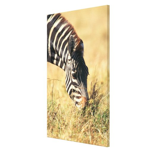 Burchell's zebra 2 canvas print
